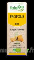 Herbalgem Propolis Large Spectre Solution Buvable Bio Fl Cpte-gttes/15ml à PARIS